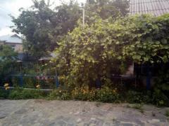 Дом, хоз.постройки, сад (домовладение) в с.Мизяковские Хутора